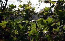 Hinter den Büschen wird gekickt…