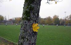 Herbstidylle auf dem Sportplatz…