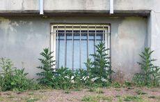 Vor den Kabinenfenstern blühen die Disteln…