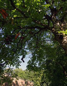 Kickschuhe im Baum